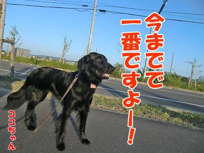 チャンスとティアラ+ココ-20120615-2-400.jpg