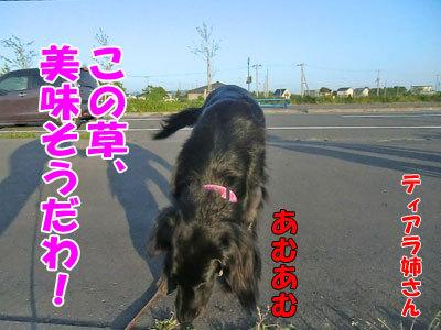 チャンスとティアラ+ココ-20120615-3-400.jpg