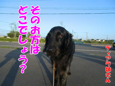 チャンスとティアラ+ココ-20120615-4-400.jpg