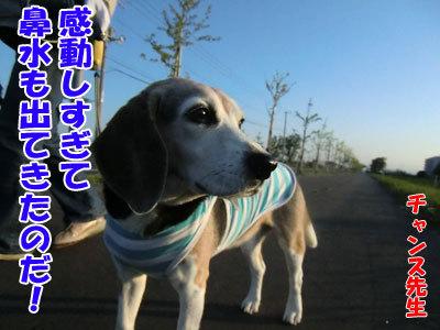 チャンスとティアラ+ココ-20120615-6-400.jpg