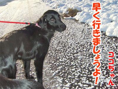 チャンスとティアラ+ココ-20101118-2-400.jpg