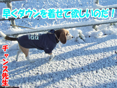 チャンスとティアラ+ココ-20101118-3-400.jpg
