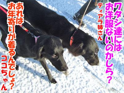 チャンスとティアラ+ココ-20101118-4-400.jpg