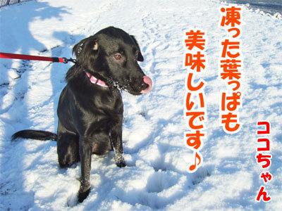 チャンスとティアラ+ココ-20101118-6-400.jpg