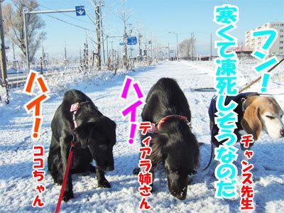 チャンスとティアラ+ココ-20101118-8-400.jpg