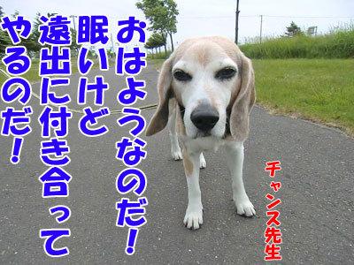 チャンスとティアラ+ココ-20120617-1-400.jpg