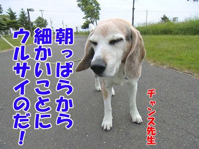 チャンスとティアラ+ココ-20120617-2-400.jpg