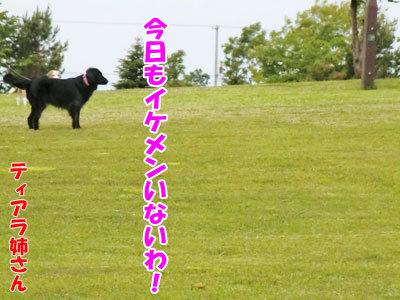 チャンスとティアラ+ココ-20120617-3-400.jpg