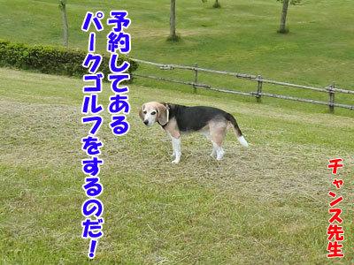 チャンスとティアラ+ココ-20120617-9-400.jpg