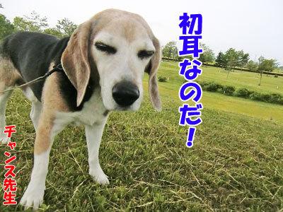 チャンスとティアラ+ココ-20120617-6-400.jpg