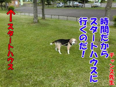 チャンスとティアラ+ココ-20120617-8-400.jpg