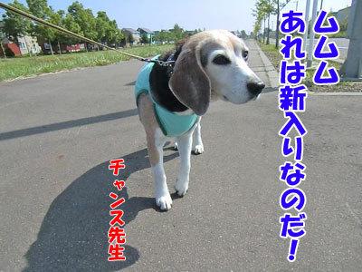チャンスとティアラ+ココ-20120618-1-400.jpg
