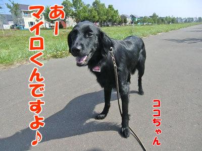 チャンスとティアラ+ココ-20120618-2-400.jpg