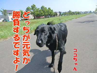 チャンスとティアラ+ココ-20120618-3-400.jpg