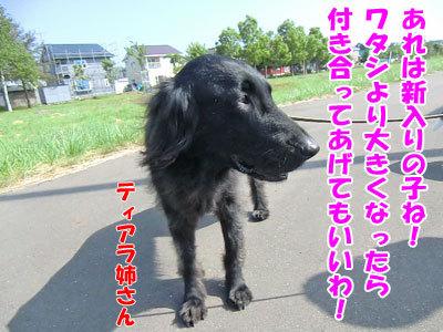 チャンスとティアラ+ココ-20120618-4-400.jpg