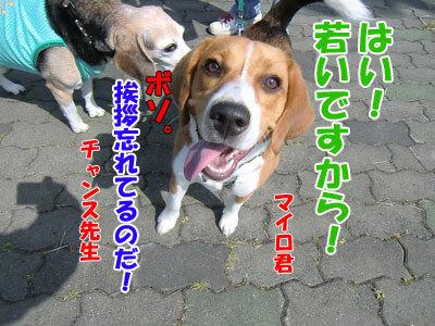 チャンスとティアラ+ココ-20120618-5-400.jpg