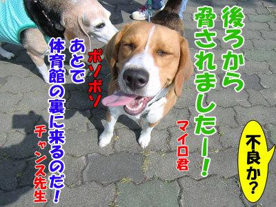 チャンスとティアラ+ココ-20120618-6-400.jpg
