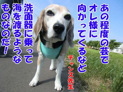 チャンスとティアラ+ココ-20120618-7-400.jpg