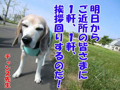 チャンスとティアラ+ココ-20120618-8-400.jpg