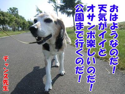 チャンスとティアラ+ココ-20120619-1-400.jpg