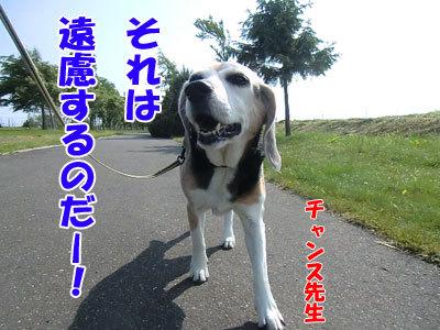 チャンスとティアラ+ココ-20120619-2-400.jpg
