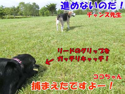 チャンスとティアラ+ココ-20120619-6-400.jpg