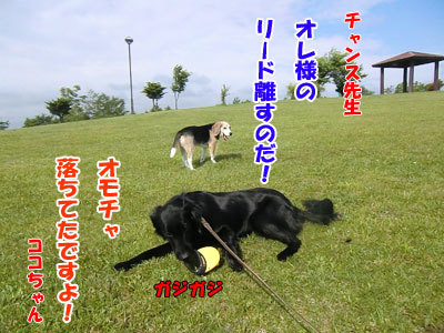 チャンスとティアラ+ココ-20120619-7-400.jpg