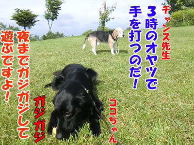 チャンスとティアラ+ココ-20120619-9-400.jpg