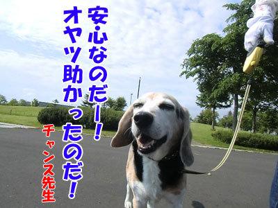 チャンスとティアラ+ココ-20120619-12-400.jpg