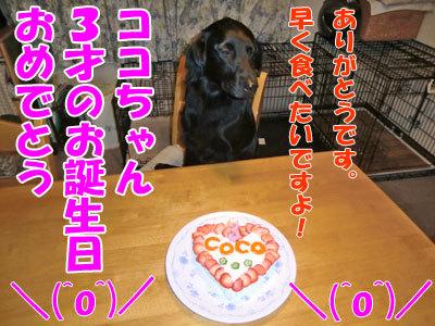 チャンスとティアラ+ココ-20120620-1-400.jpg