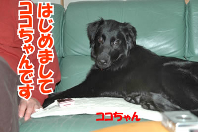 チャンスとティアラ+ココ-20100214-1.jpg
