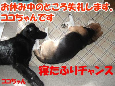チャンスとティアラ+ココ-20100214-2.jpg