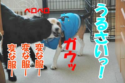 チャンスとティアラ+ココ-20100218-6.jpg