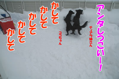 チャンスとティアラ+ココ-20100218-3.jpg