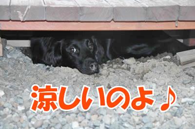 チャンスとティアラ+ココ-20100805-5.jpg