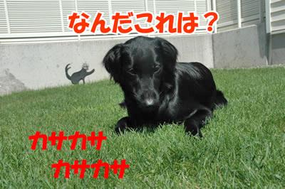 チャンスとティアラ+ココ-20100828-5.jpg