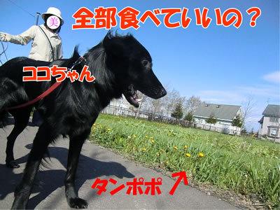 チャンスとティアラ+ココ-20110519-1.jpg