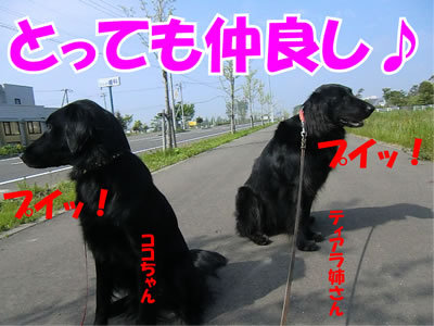 チャンスとティアラ+ココ-20110609-5.jpg