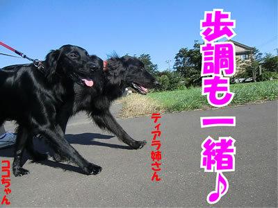 チャンスとティアラ+ココ-20110908-11.jpg