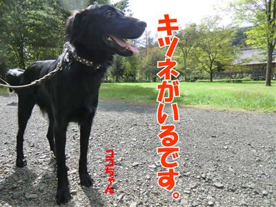 チャンスとティアラ+ココ-20110928-8.jpg