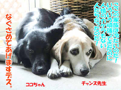 チャンスとティアラ+ココ-20111006-8.jpg