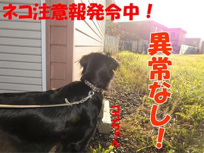 チャンスとティアラ+ココ-20111013-4.jpg