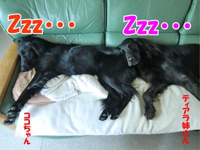 チャンスとティアラ+ココ-20111020-8.jpg