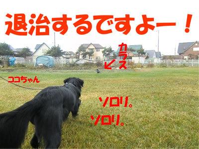 チャンスとティアラ+ココ-20111110-1.jpg