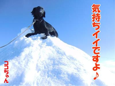 チャンスとティアラ+ココ-20120220-5-400.jpg
