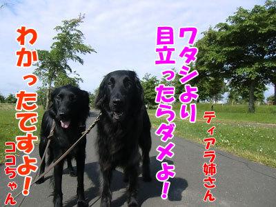 チャンスとティアラ+ココ-20120620-101-400.jpg