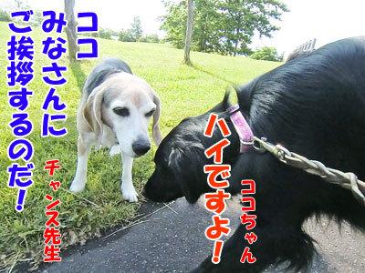 チャンスとティアラ+ココ-20120620-102-400.jpg