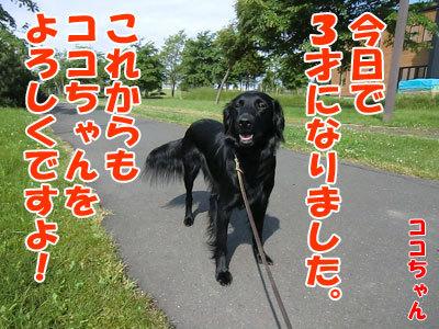 チャンスとティアラ+ココ-20120620-103-400.jpg