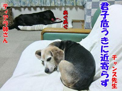 チャンスとティアラ+ココ-20120621-8-400.jpg