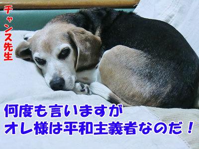 チャンスとティアラ+ココ-20120621-9-400.jpg